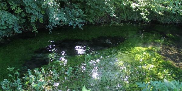 kristallklares Wasser im Almer Bach