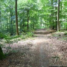 Waldweg mit Markierung