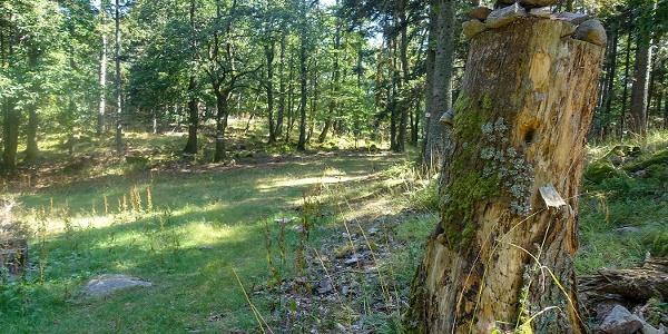 Durch den Wald nach Ribeauvillé