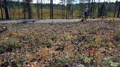 Forest views in Petäjäkangas trail, Kuusamo