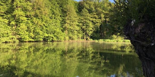 Abendstimmung am Teich - Paradiesmühle