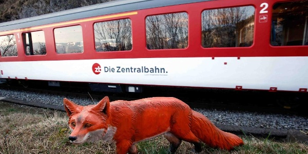 Brünig Safari mit Fuchs