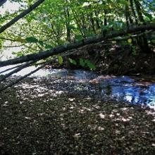 Niedrigwasser in der Biber