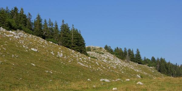 Blickschneiße zum Gipfel des Breitensteins