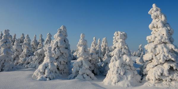 Winter in Rehefeld