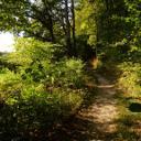 Waldweg am Wiesenrand