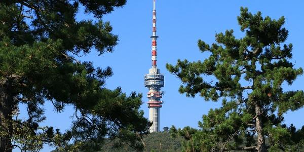 A tv-torony a Flóra-pihenőtől