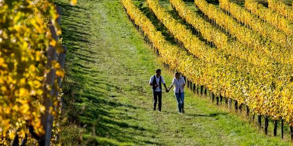 WEINwandern an der Südsteirischen Weinstrae