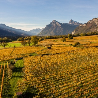 Blick auf die Weinbauregion Bündner Herrschaft