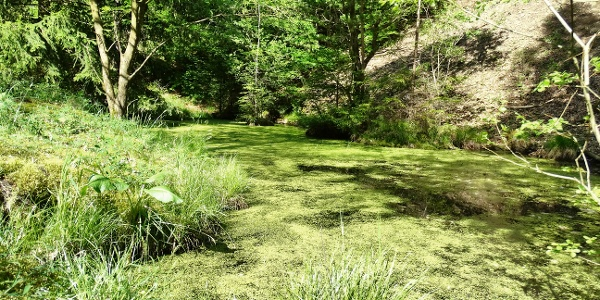 Teich im Wald bei Katzenbach
