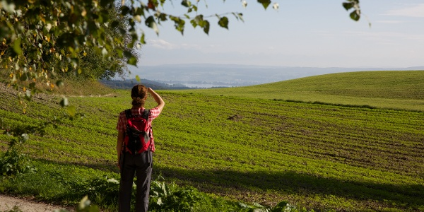 Wanderweg am Schneckenberg