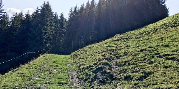 0.30 km - Vor dem Waldstück rechts abbiegen und rot-weiß markiertem Pfad über Wiese bergauf folgen.
