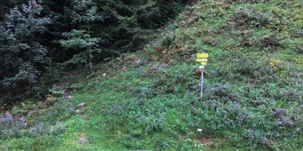 """0.00 km - Nach links weg vom Fahrweg starten, Wegweiser Richtung """"Amoser Niederalm""""."""