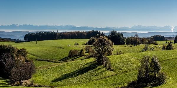Aussicht beim Gupfen zu den Schweizer Alpen