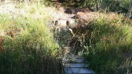 Einstieg zum Hochmoor