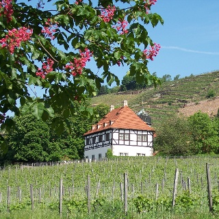 Weingut Hoflößnitz & Weinbaumuseum
