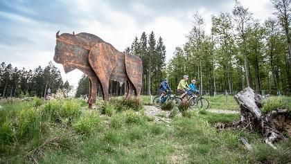 Mit dem Mountainbike auf Tour im Reich der Wisente