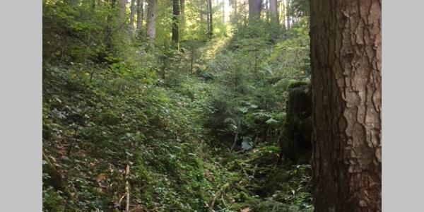 Blick vom Pfad in den Wald