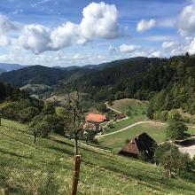 Foto von Wanderung: Ein Stück auf dem Westweg • Schwarzwald (22.09.2018 16:13:37 #2)
