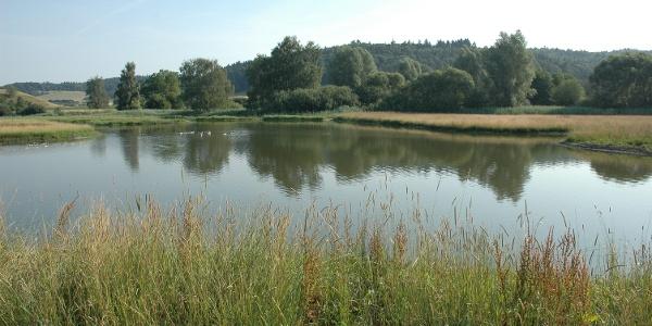 Weiher Nesselwanger Ried bei Überlingen-Nesselwangen