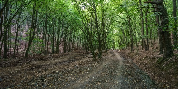 Kisirtás előtt az erdőben