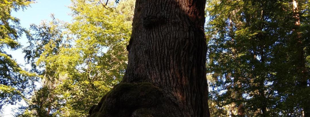Eulenbäume