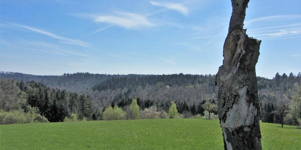 Blick über den Schwäbischen Wald
