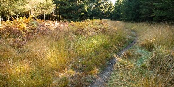Der naturnahe Pfad verläuft entlang der ehemaligen belgisch-preußischen Grenze, …