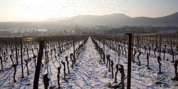 Göcklingen im Schnee