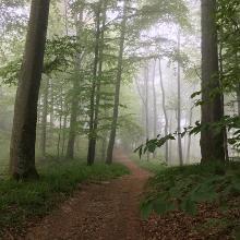 Genauso liebe ich es - der Schwarzwald zeigt sich von seiner mystischen Seite :-)