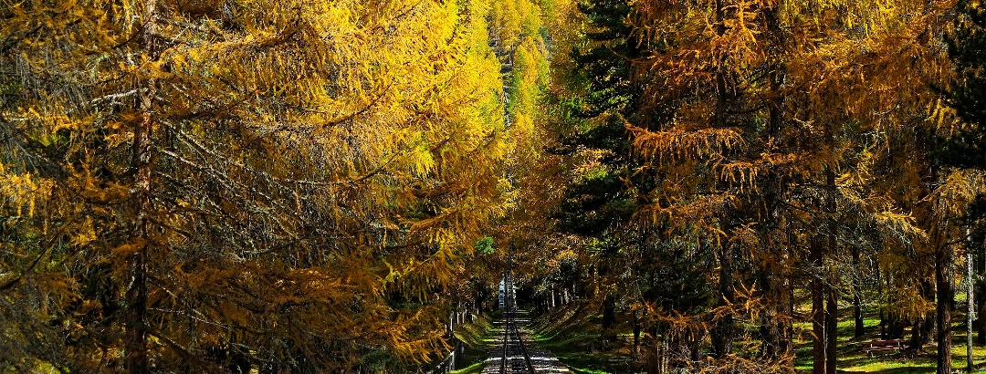Goldener Herbst.