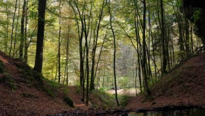 Blick von der Bank aus der unteren Bärenhöhle in den Wald.