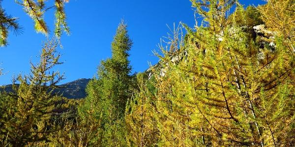 Goldener Herbst im Mattertal.