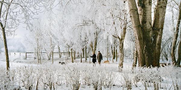 Der Kurpark im Winter (Beginn des Naturlehrpfades)