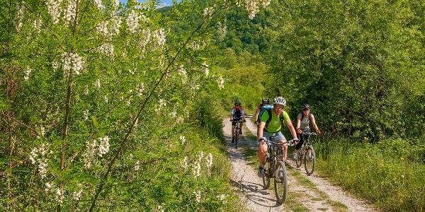 Freundlicher Weg am Fluss Soča