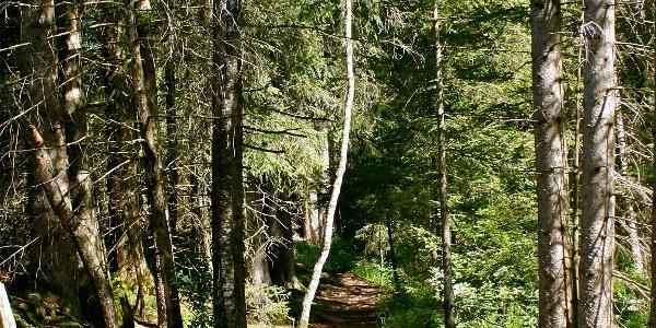 Waldpfad im Tiefenberger Moos