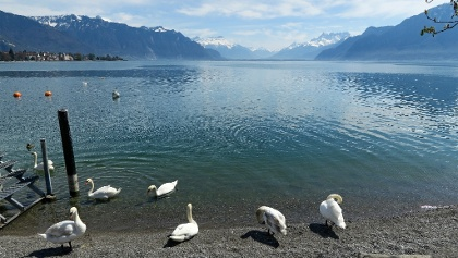 Genfersee bei Vevey.
