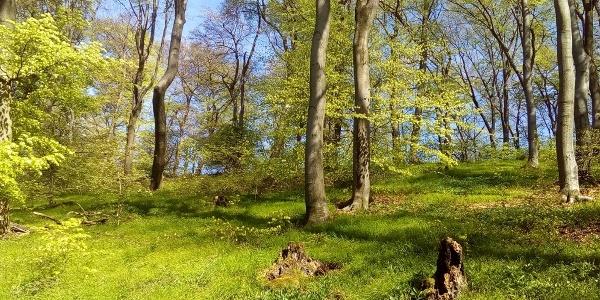 Schöne Buchenwälder entlang des Weges