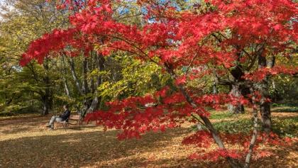 The Arboretum of Buda