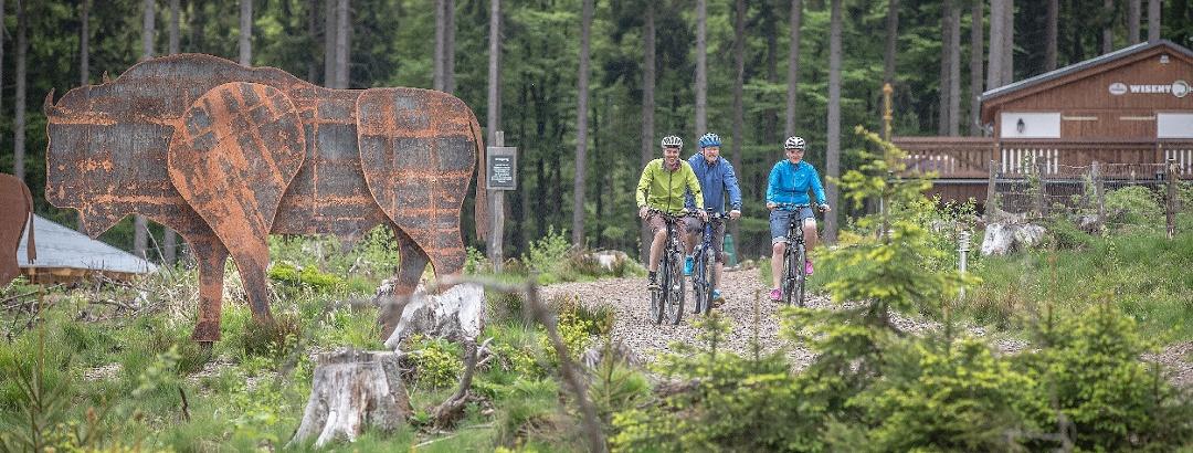 Radfahrer fahren am Eingang der Wisent-Wildnis