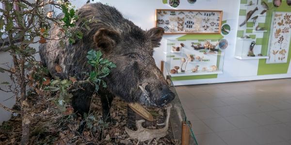 kiállítás a Pákozd-Sukorói Arborétum Tájházában