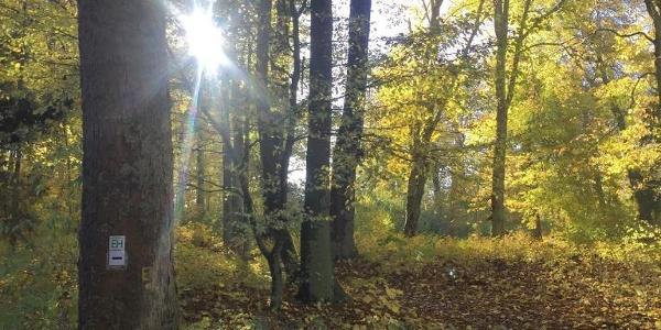 Herbstlicher Stadtpark in Eisenach