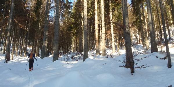Aufstieg durch den Wald bei wenig Schneeauflage
