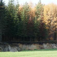 Sandgrube zwischen Kettenkamp und Bippen (Station3)