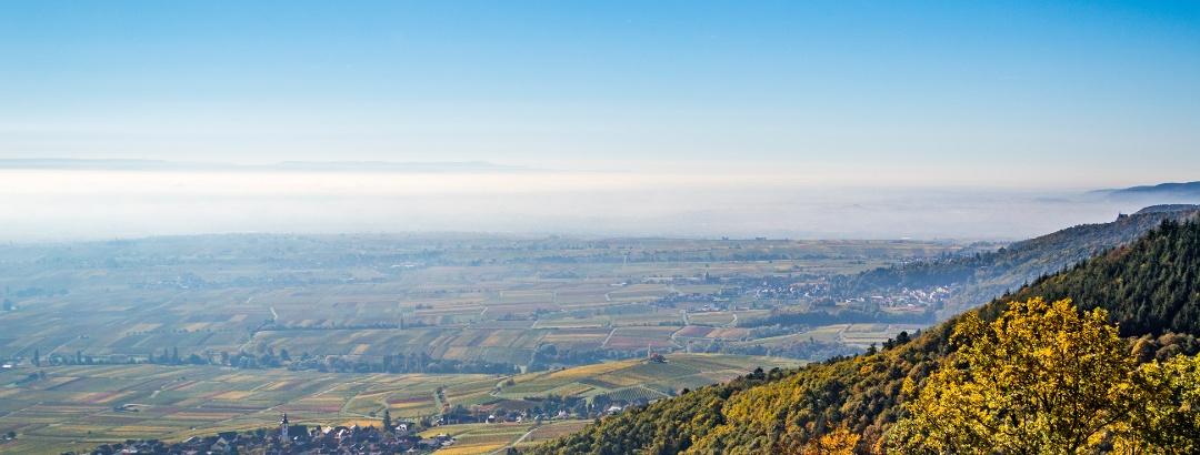 Aussicht von Rietburg, Rhodt und Weyher