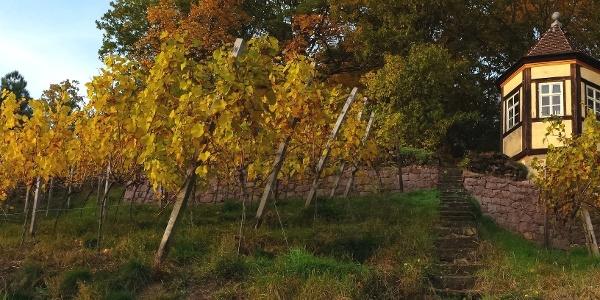 Weinausschank an der Finsteren Gasse