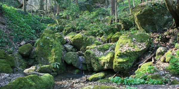 Kalandra hívogatnak a gigantikus mohás sziklák...