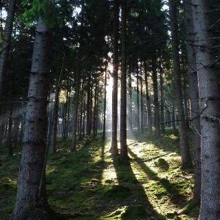 Wald rund um den Fang Bad Laasphe
