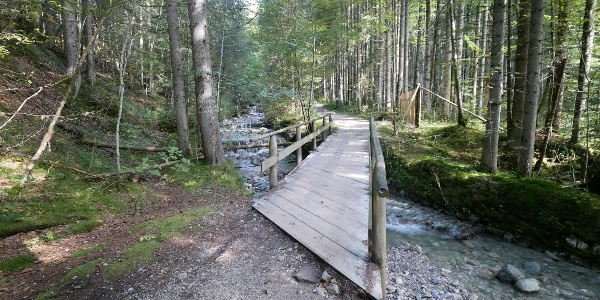 Wir starten die Tour bei Linderhof durch ein Waldstück.