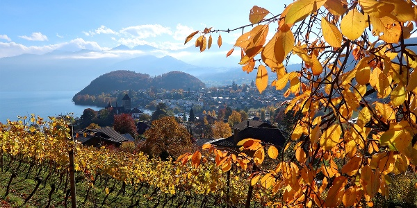 Blick vom Rebberg auf das Schloss Spiez.